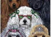 Peluquera de perros pequeños a domicilio