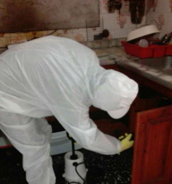 Fumigaciones y control de plagas con desinfecciones 4295-5377